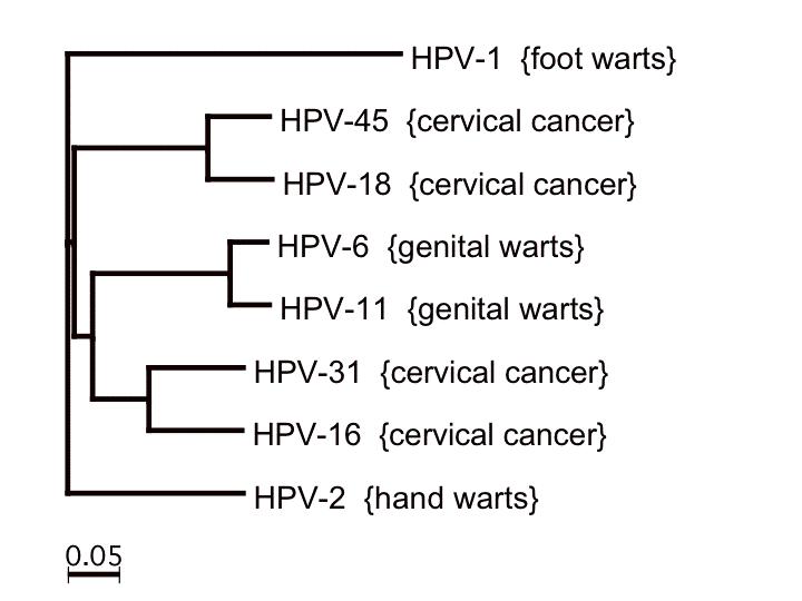 HPV_tree_1