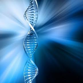 immunity genes