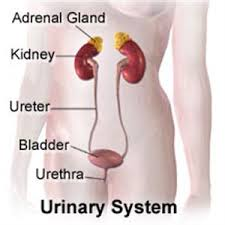 inflammation of the urethra