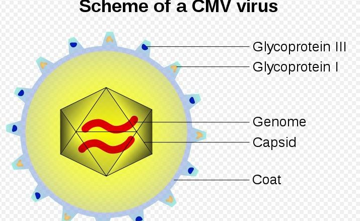 CMV tumors